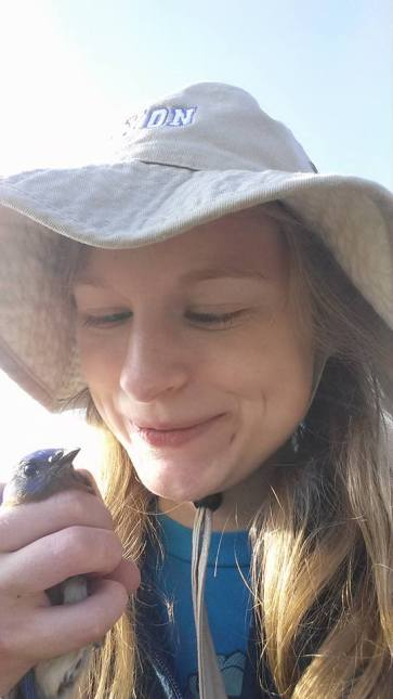 Sarah McPeek proudly surveys a male eastern bluebird captured in her mist net.