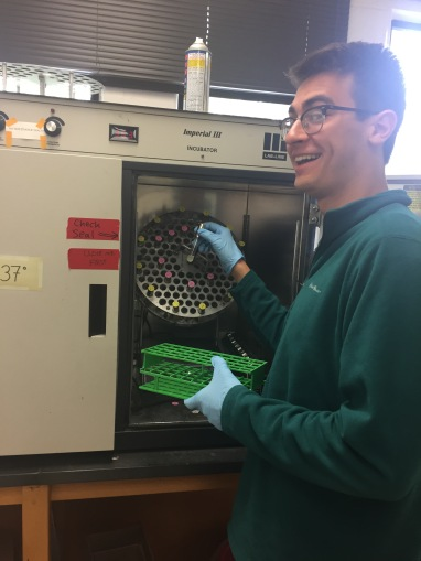 Carter Brzezinski excitedly loading overnights for his and Sarah Manz's research on the affects of methyl jasmonate on E. coli growth.