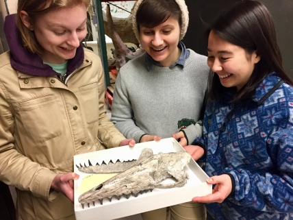 Sarah McPeek, Jess Kotnour, and Hannah Wedig admire a skull of Pakicetus, and early, semi-aquatic whale, in the vertebrate paleontology collection of the Smithsonian Museum of Natural History.